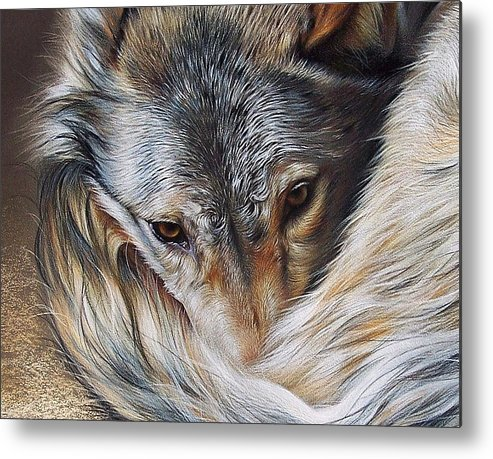 Wolf Metal Print featuring the drawing Watchful Rest -close-up Detail by Elena Kolotusha