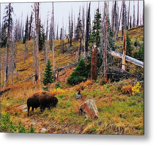 Animal Metal Print featuring the photograph Western Icon by Benjamin Yeager