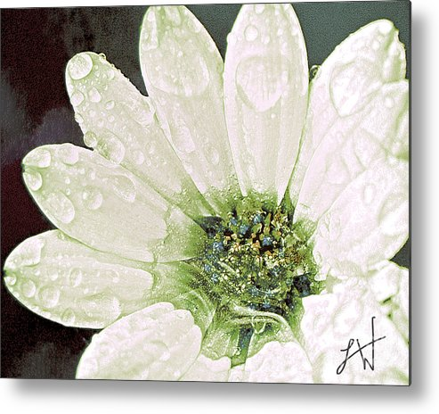 Large White Flower Close Up Metal Print featuring the digital art Wet Petals by Artist and Photographer Laura Wrede