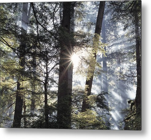 Kaniksu National Forest Metal Print featuring the photograph Forest Sunrise by Leland D Howard