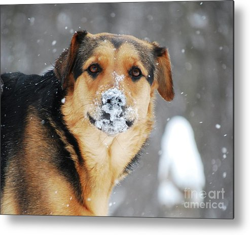 Dog Metal Print featuring the photograph Snow Smile by Lila Fisher-Wenzel