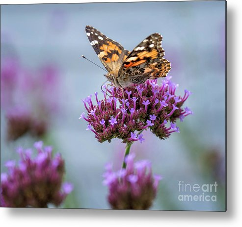 Painted Lady Metal Print featuring the photograph Alit by Claudia Kuhn