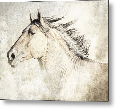 Equine Metal Print featuring the photograph Bolero by Ron McGinnis