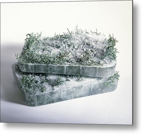 Composition Metal Print featuring the photograph Pine Twigs And Ice by Stefania Levi