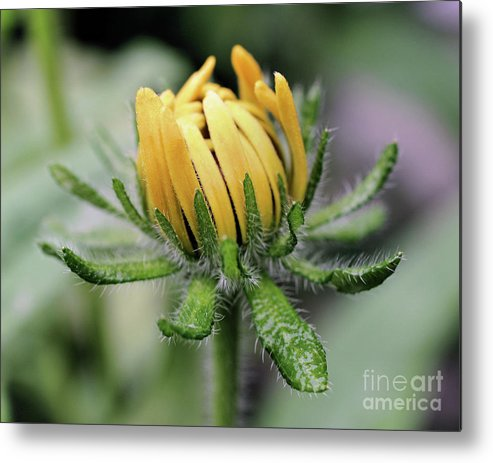Flower Metal Print featuring the photograph Awakening by Smilin Eyes Treasures