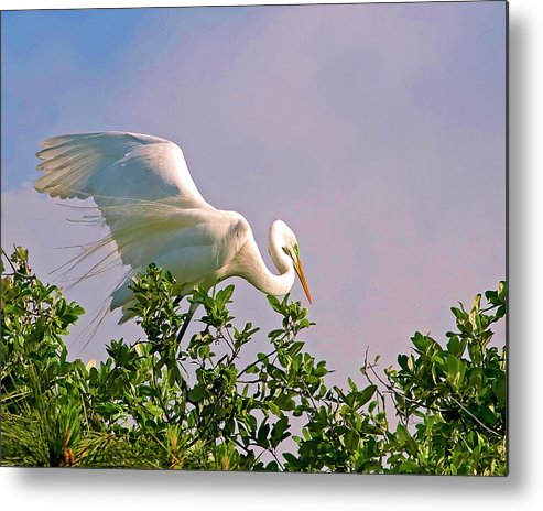 Birds Metal Print featuring the photograph Balancing Act by Sally Mitchell