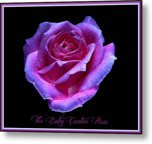 Nature Metal Print featuring the photograph Betsy Cartier Rose by Clyde Nordan