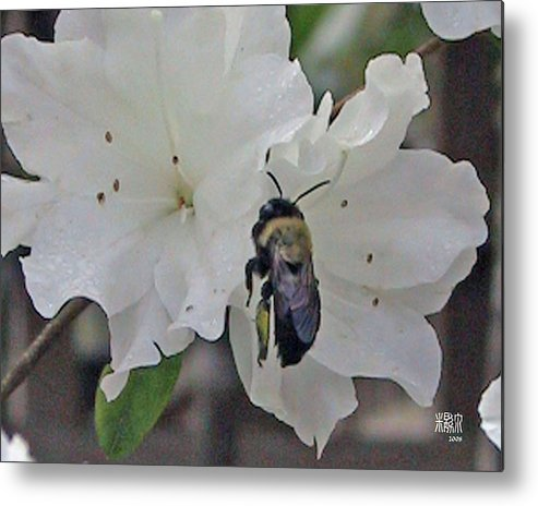 Flowers Metal Print featuring the photograph Busy Bee by Michele Caporaso