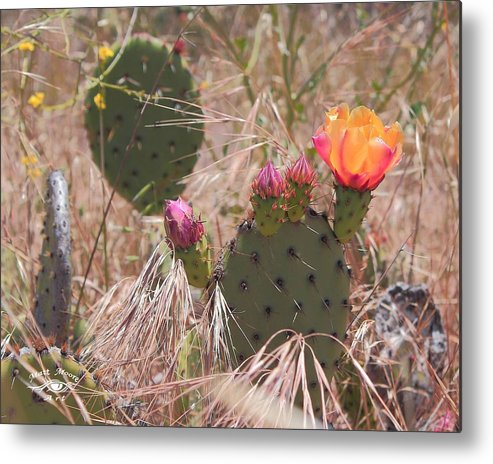 Cactus Metal Print featuring the photograph Colorful Cactus by Matthew Moore