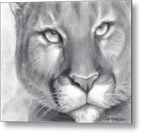 Cougar Metal Print featuring the drawing Cougar Spirit by Carla Kurt