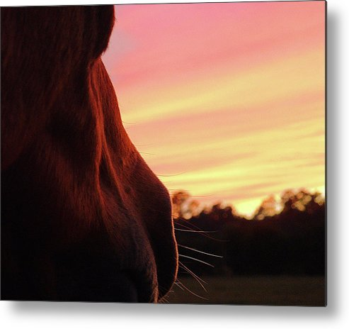 Horse Metal Print featuring the photograph Day Is Done by M Kathleen Warren