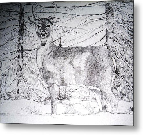 Whitetail Metal Print featuring the drawing Deep Snow by Debra Sandstrom