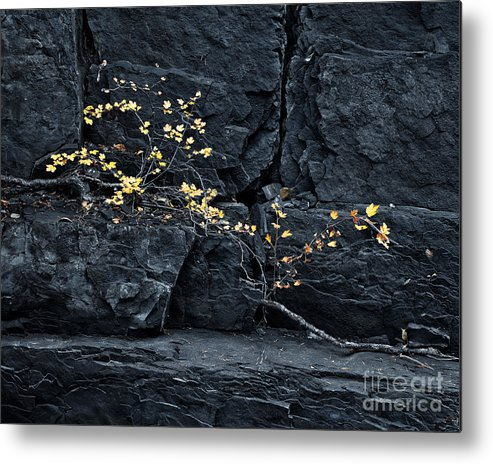 Rocks Metal Print featuring the photograph Fall On The Rocks by Royce Howland