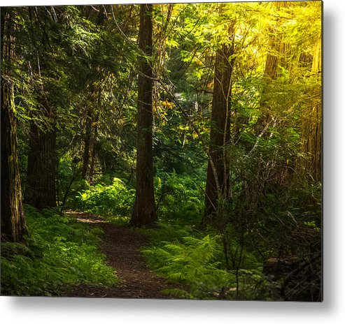Roosevelt Grove Metal Print featuring the photograph Forest Path by Yeates Photography