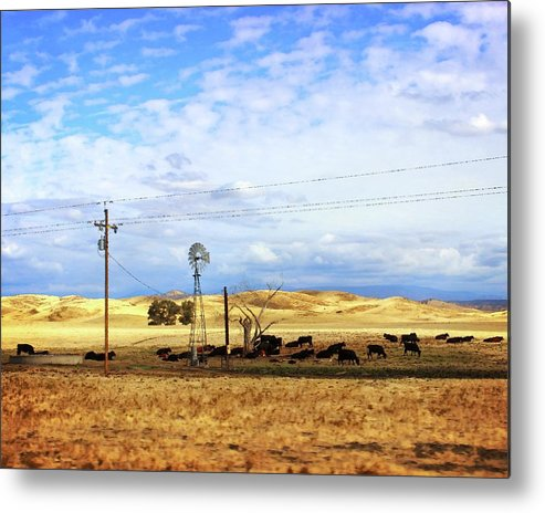 Cows Metal Print featuring the photograph Fresno County Pastoral by Timothy Bulone