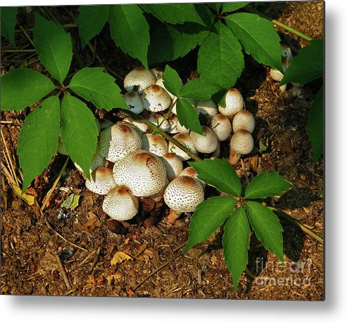 Fungus Metal Print featuring the photograph Fungal Appeal by Deborah Johnson
