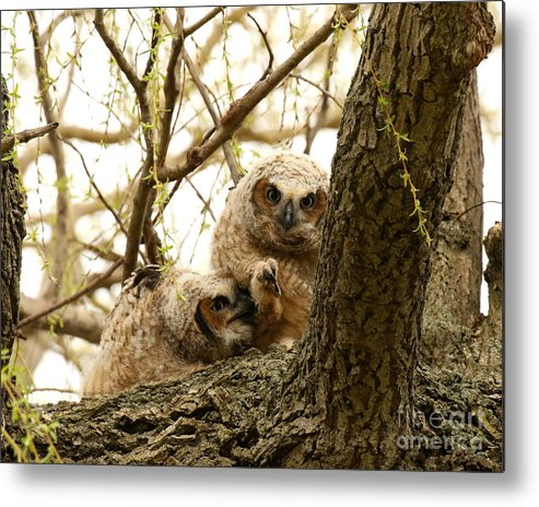 Owls Metal Print featuring the photograph Future Podiatrist by Heather King