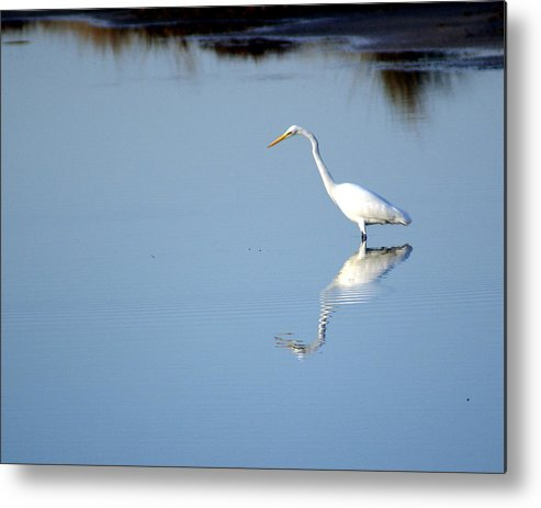 Birds Metal Print featuring the photograph Great Blue 2 by Marty Koch
