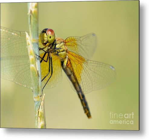 Dragonfly Metal Print featuring the photograph Happy Dragonfly by Dot Lestar Roberts