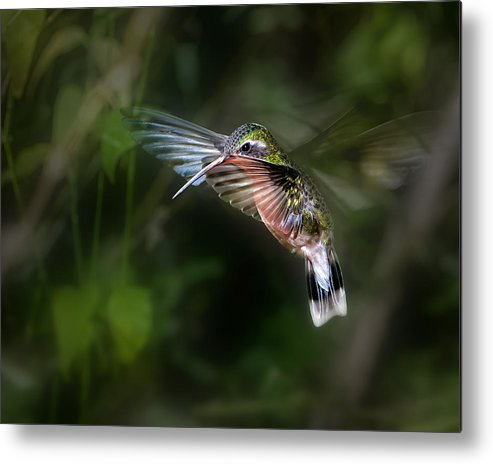 Nature Metal Print featuring the photograph Hummingbird 1b by Leigh Pelton