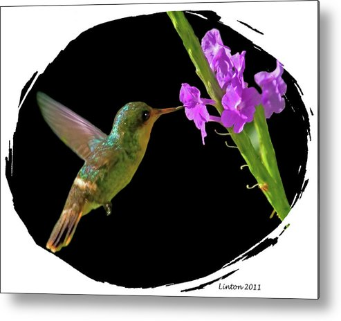 Tufted Coquette Metal Print featuring the digital art Hummingbird by Larry Linton