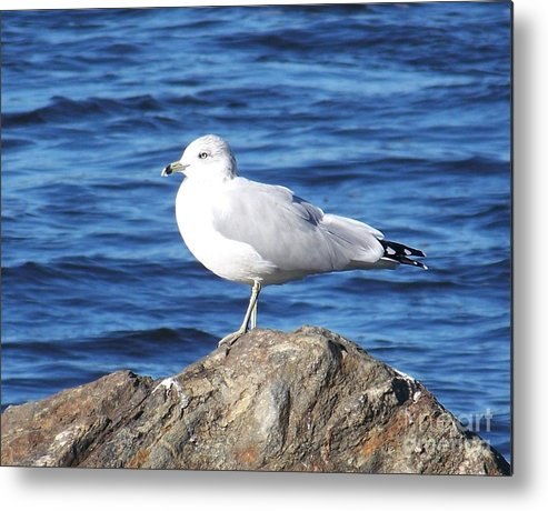 Seagull Metal Print featuring the photograph I Am A Rock Star - Photograph by Jackie Mueller-Jones