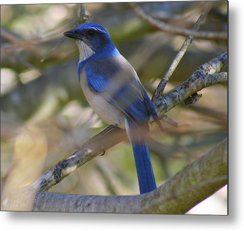Blue Bird Metal Print featuring the photograph I Think I Found The Blue Bird Of Happiness by Kerry Reed