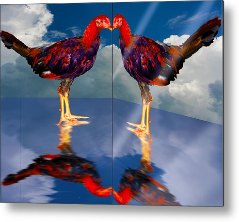Rooster Farm Animals Birds Fighting Cock Metal Print featuring the painting In The Mirror by John Breen