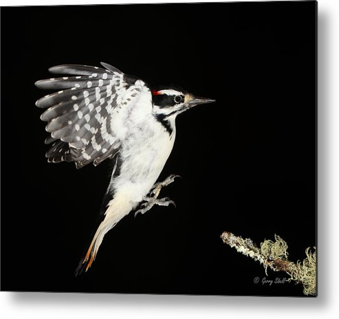 Nature Metal Print featuring the photograph Last Call by Gerry Sibell