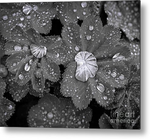 Black And White Metal Print featuring the photograph Leaf Pools by Emma England