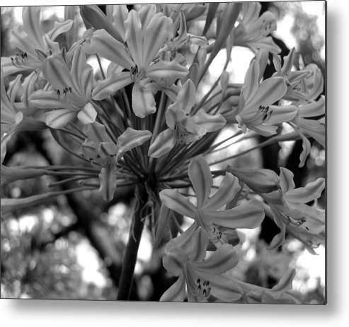 Photograph Metal Print featuring the photograph Lily And The Trees by Lindsey Orlando