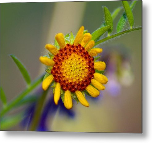 Nature Metal Print featuring the photograph Living Sunshine by Ben Upham III