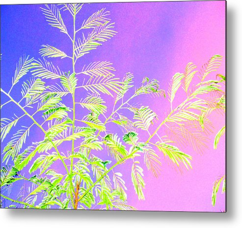 Manipulated Photo Metal Print featuring the photograph Miami Fern by Tracy Daniels