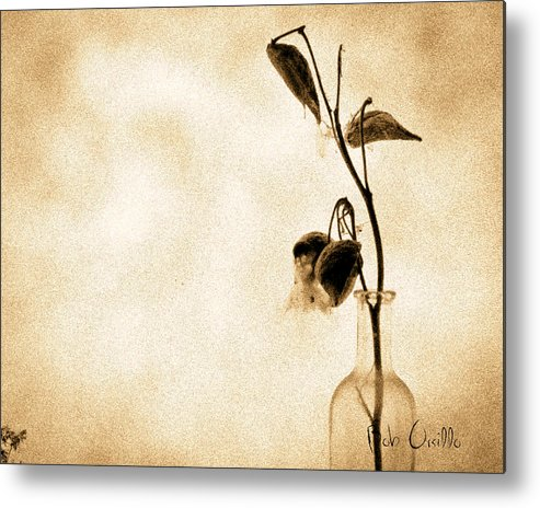 Plant Metal Print featuring the photograph Milk Weed In A Bottle by Bob Orsillo