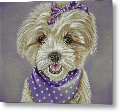 Dog Metal Print featuring the drawing Molly The Maltese by Karrie J Butler