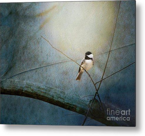Bird Metal Print featuring the photograph Moonlit Chickadee by Sari Sauls