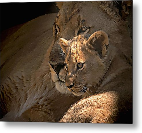Motherhood Metal Print featuring the photograph Motherhood by Dawn Van Doorn