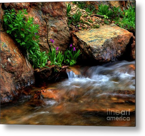 Wild Flowers Metal Print featuring the photograph Mountain Stream Garden by Kenneth Eis