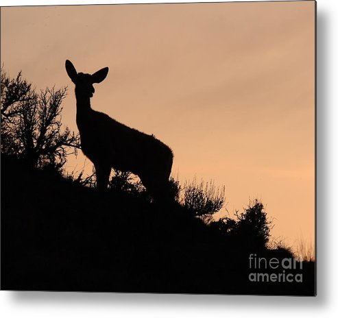 Deer Metal Print featuring the photograph Mule Deer Silhouetted Against Sunset Ridge by Max Allen
