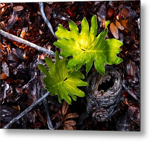 Plant Metal Print featuring the photograph New Growth by Christopher Holmes
