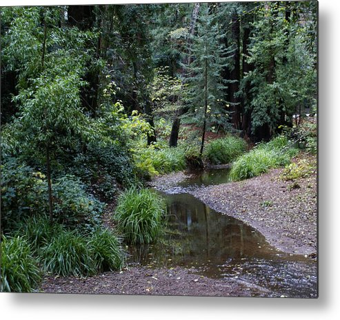 Mount Tamalpais Metal Print featuring the photograph Old Mill Park In Mill Valley by Ben Upham III