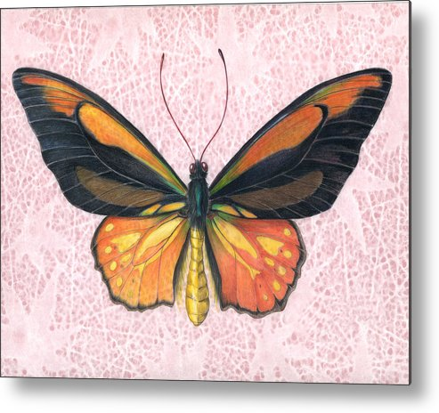 Moths Metal Print featuring the painting Oranged Birdwing by Mindy Lighthipe