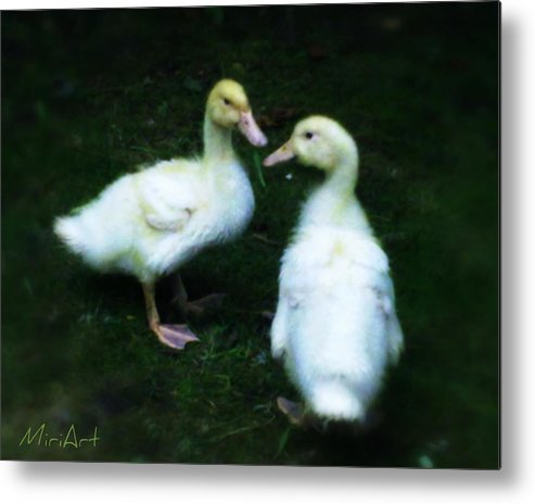 Ducks Metal Print featuring the photograph Our Ducks by Miriam Shaw