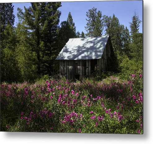 Jimstephenson Metal Print featuring the photograph Overwhelmed By Pink by Jim R Stephenson
