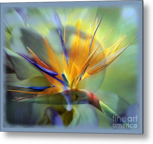 Flower Metal Print featuring the photograph Paradise Found by Chuck Brittenham
