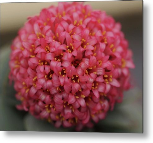 Flowers Metal Print featuring the photograph Pinkbubble by Martina Fagan