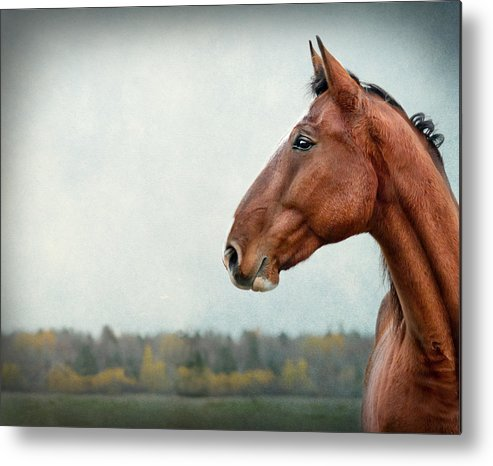 Horse Metal Print featuring the photograph Proud by Maggie Terlecki
