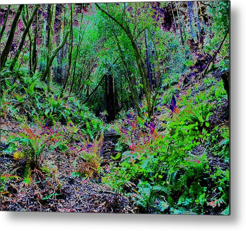 Ferns Metal Print featuring the photograph Psychedelic Fern Gully On Mt Tamalpais by Ben Upham III