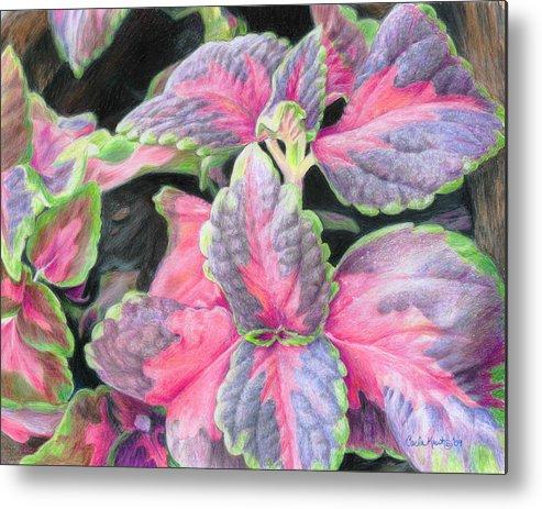 Purple Metal Print featuring the drawing Purple Flowering Plant by Carla Kurt