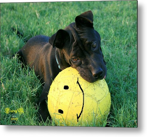 Dog Metal Print featuring the photograph Raising Raisin by Terry Burgess